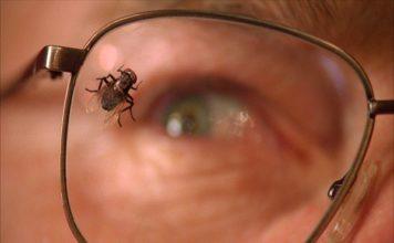 walter white y la mosca